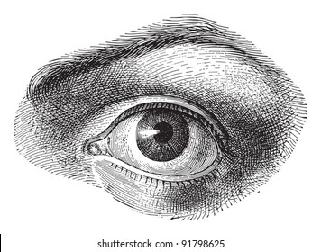 Human eye - Vintage illustration from Meyers Konversations-Lexikon 1897