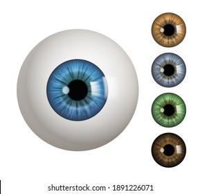 Human eyeball. People anatomical items macro view vision 3d medical decent vector symbols