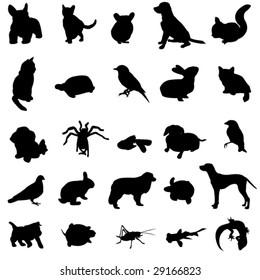 Human favorite pet animal
