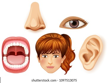 A Human Female Facial Part illustration
