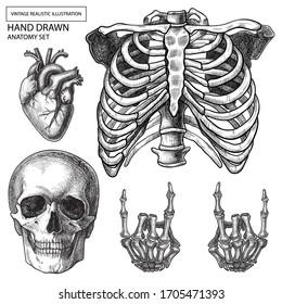 Human hand bones anatomy vector  set