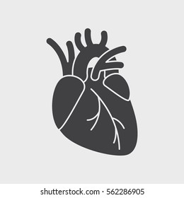 Human heart anatomy. Heart medical science vector illustration. flat vector icon isolated