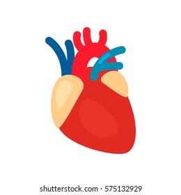 Human heart anatomy. Heart medical science vector illustration. flat vector icon isolated