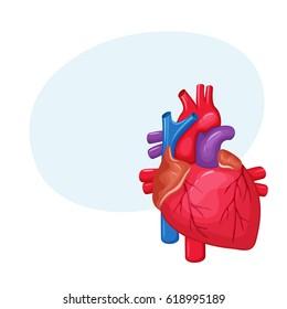Human heart anatomy. Medical science vector illustration. Internal organ: atrium and ventricle, aorta, pulmonary trunk, valve and vein.