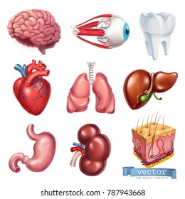 Human heart, brain, eye, tooth, lungs, liver, stomach, kidney, skin. Medicine, internal organs. 3d vector icon set