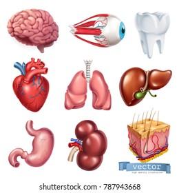 Human heart, brain, eye, tooth, lungs, liver, stomach, kidney, skin. Medicine, internal organs. 3d vector icon set