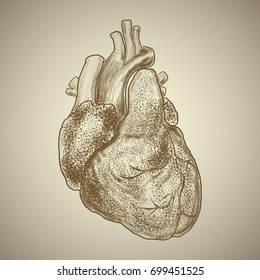 Apex of Heart Images, Stock Photos & Vectors | Shutterstock