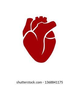 Human heart icon on a white background. Realistic human heart. Vector illustration.