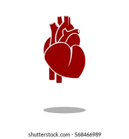 Human heart icon vector