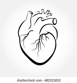 Human heart icon vector. Anatomy heart drawings.