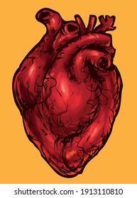 human heart internal organ anatomy vector graphics