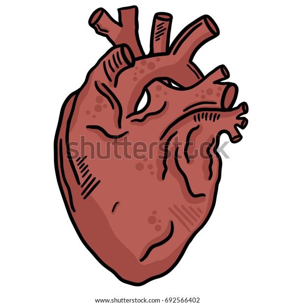 Human Heart Line Art Vector Illustration Clip Art