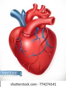 Human heart. Medicine, internal organs. 3d vector icon.