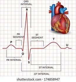 Human heart normal sinus rhythm and human heart detailed anatomy. Medical illustration.