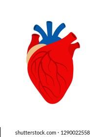 Human heart organ isolated on white background. Vector heart organ, human medical health illustration