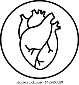 Human heart organs vector line icon isolated on white background.