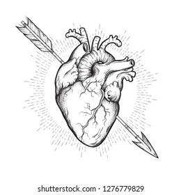 Human heart pierced with cherubs arrow hand drawn line art and dotwork. Flash tattoo or print design vector illustration