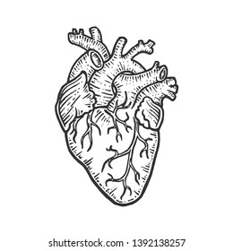 Human heart sketch engraving vector illustration. Scratch board style imitation. Black and white hand drawn image.