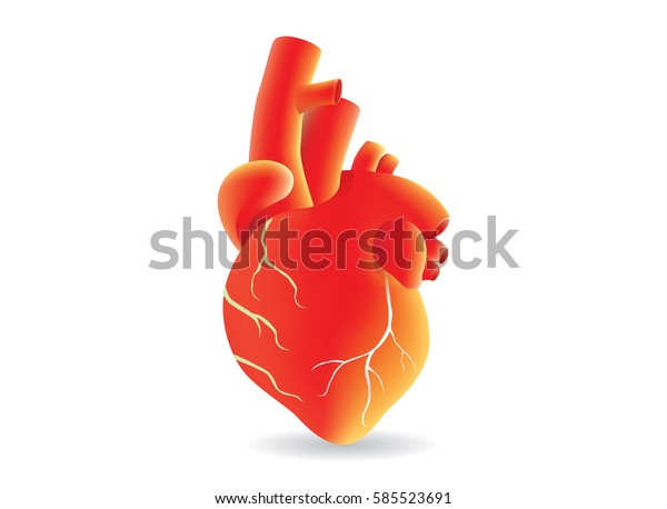 Human heart vector red color on isolated. Illustration about medical and anatomy.