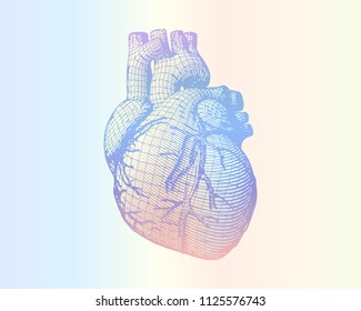 Human heart vector wireframe engraving drawing in retro style isolated on multi color ramp background