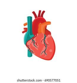 Human internal organ. heart icon. vector, illustration