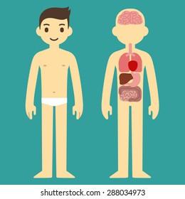Human internal organ infographic chart of a stylized cartoon man.