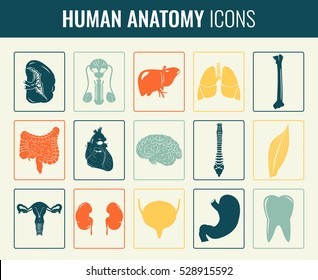 Human internal organs. Anatomy set. Vector icons