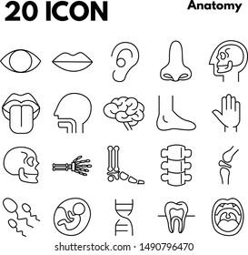 Human internal organs detailed icons set