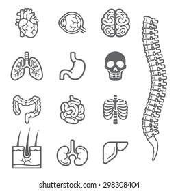 Human internal organs detailed icons set. Vector illustration