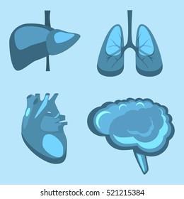 Human internal organs vector flat liver, brain, lungs, heart medicine anatomy. Healthy life concept illustration