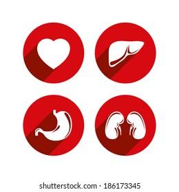 Human internal organs vector icons set.