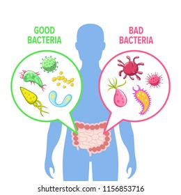 Human intestinal flora vector illustration. Intestinal gut good and bad bacteria visualization. Human gut flora inforgraphic image.