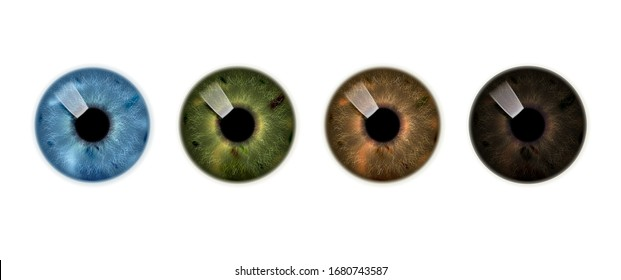 Human iris, set of brown, green and blue eyes. Vector icon.