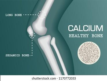 human knee joint medical diagnostic emblem for orthopedic clinic