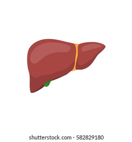 Human liver anatomy. Human internal organs symbol. Vector illustration in flat style isolated on white background