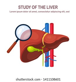 Human liver isolated on white background. Study of internal organ. Gallbladder, aorta, portal vein, hepatic duct. Medical science anatomy. Vector flat design
