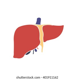 human liver. vector illsutration