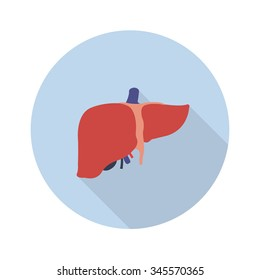 human liver. vector illustration