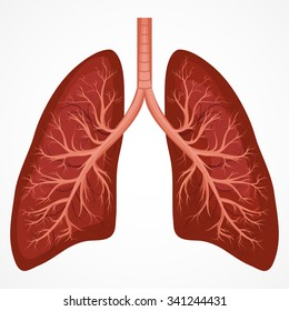 Diseased lungs stock vectors images vector art shutterstock human lung anatomy diagram illness respiratory cancer graphics vector ccuart Images