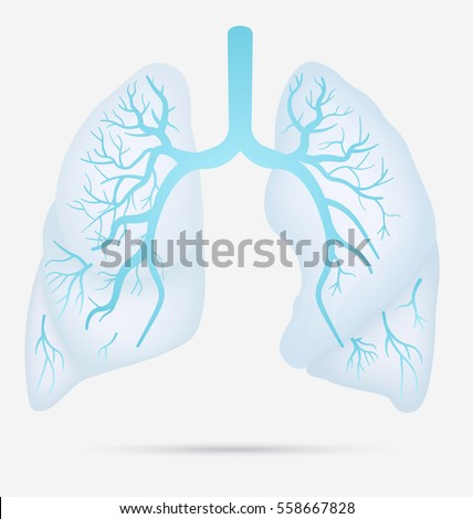 Human Lungs Anatomy Asthma Tuberculosis Pneumonia Stock Vector ...