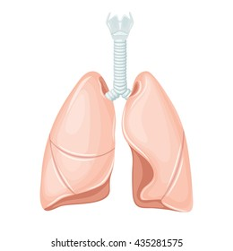 Human lungs anatomy. Medical science vector illustration. Internal organ: trachea, bronchi, right and left lobes. education illustration