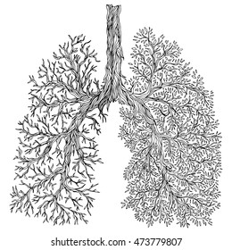 Human lungs. respiratory system. Healthy lungs. Light in the form of a tree. Line art. Black and white drawing by hand. Doodle.