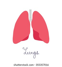 human lungs. vector illsutration