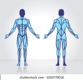 Human muscles anatomy model vector