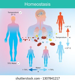 Superb Homeostasis Images Stock Photos Vectors Shutterstock Download Free Architecture Designs Rallybritishbridgeorg