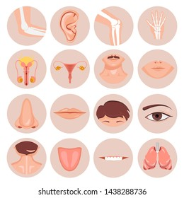 Human nose, ear, mouth hair and eye neck back tongue tooth thoart clavicle lips beards knee elbow wrist damage Male female reproductive anatomical set, Vector