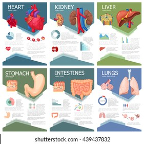 Human organ anatomy infographic poster with chart, diagram and icon. Kidney, lung, liver, heart, stomach, intestine medical science brochure