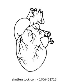 The human organ is the heart. A drawn heart with vessels. Vector illustration with a heart on a white background. Printing on banners, posters, medical cards, and flyers. Isolated sign.