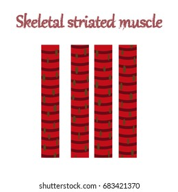human organ icon in flat style skeletal striated muscle