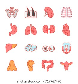 human organ - line filled - vector logo/icon illustration bundle